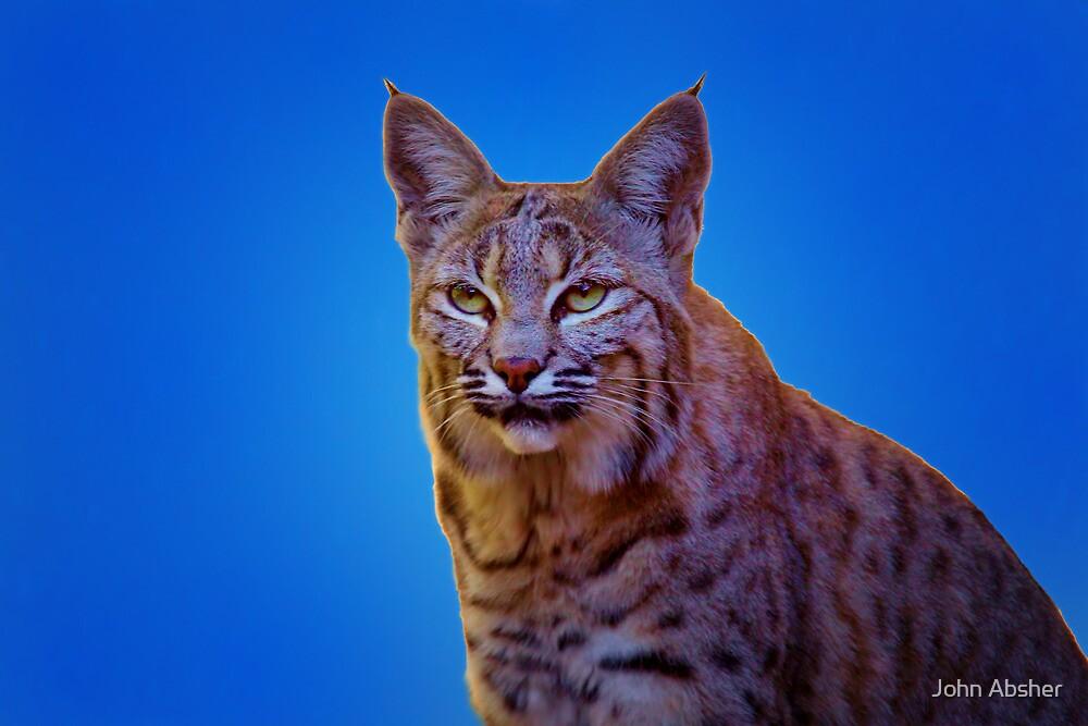 """Bobcat - ..."