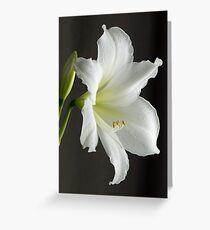 Amaryllis close-up Greeting Card