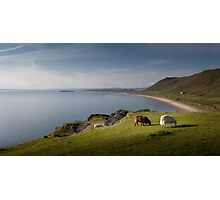 Sheep at Rhossili bay Photographic Print