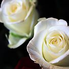 White Roses #2 by J J  Everson