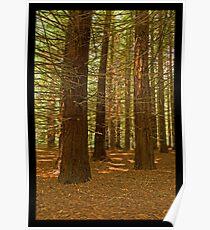 Carpeted Forest - Downstream of Stevenson Fall Poster