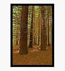 Carpeted Forest - Downstream of Stevenson Fall Photographic Print