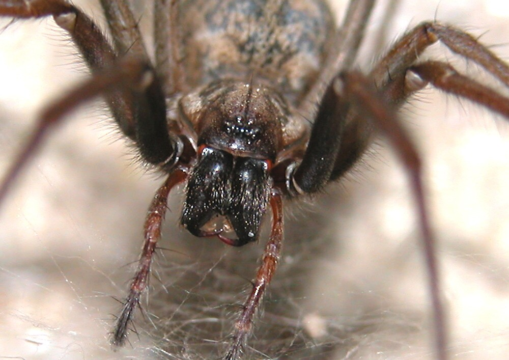 Arachnophobie by newfan