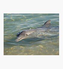 Dolphin at Monkey Mia Photographic Print