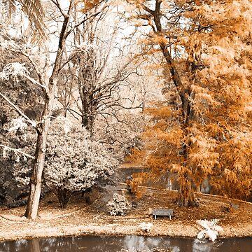 Willow tree by gavila
