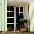 pretty shuttered window with bonsai by BronReid