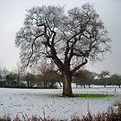 Ein Wintertag von trish725