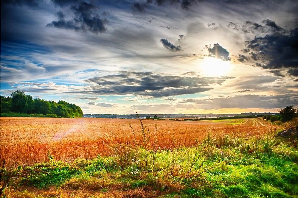 Sunshine and Showers by Vicki Field