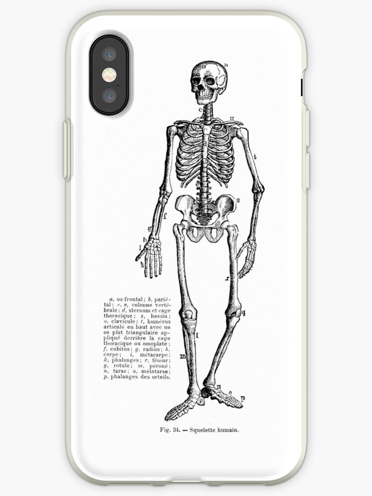 Vinilos y fundas para iPhone «Esqueleto de anatomía humana ...