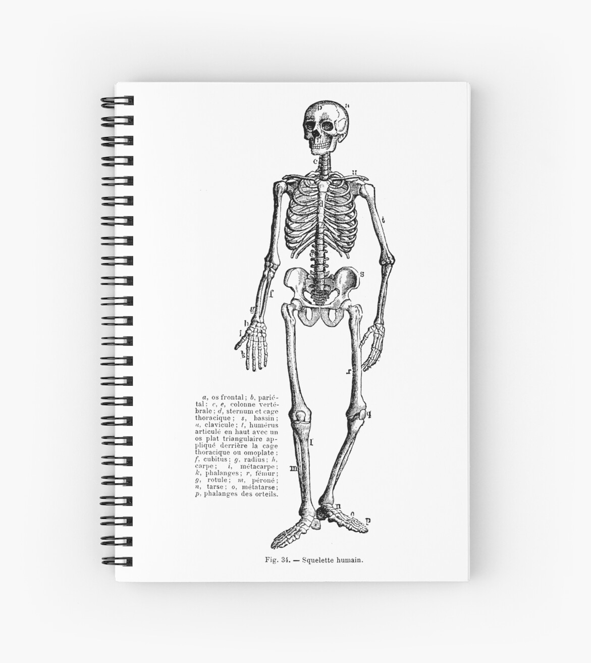 Renaissance Human Anatomy Skeleton Spiral Notebooks By Pixelchicken