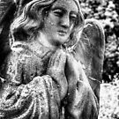 Stone Angel by Vicki Field