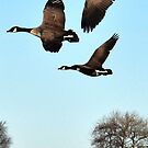 Trio Flight by loz788