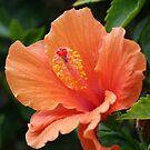 Simply Orange; La Mirada, CA USA; Wat Garden  by leih2008
