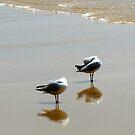 Seagull Siesta by Vonnstar