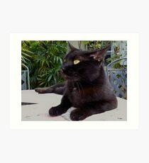 Black Cat Blues Art Print