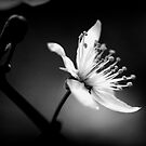 whisper of white by NEmens