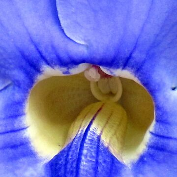 blue (Mauritius) by FedericoFaggion