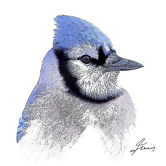The Blue Profile 3 by DigitallyStill