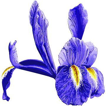 Iris, Irises, Wild, Purple Rainbow Flower, Van Gogh by worn