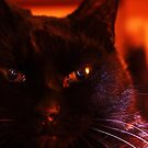 Look Into My Eyes ...  by J J  Everson