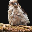 Kookaburra by JuliaKHarwood