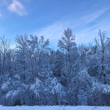 Snowy Trees in Northern Minnesota by gorff