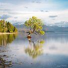 The Little Tree at Lake Wanaka by Mieke Boynton