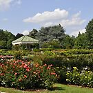 Hershey Rose Garden, Hershey, PA by Corkle