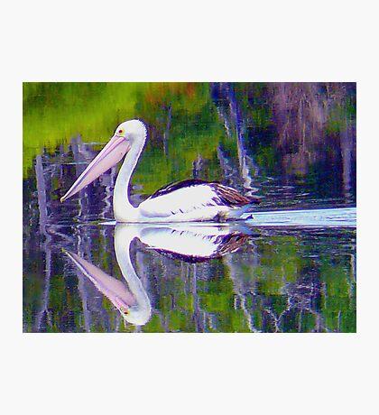 Pelican Path. Photographic Print