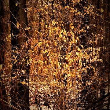 Color in the Winter Woods  by lorilee
