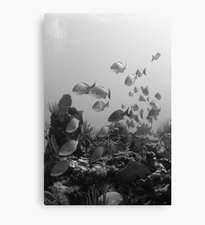 Fish flyby (B&W) Canvas Print