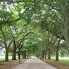 Savannah, Georgia by Doug Bend
