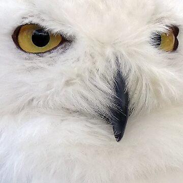 Snowy Owl #2 by trish725