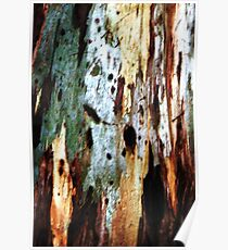 Coloured Bark Poster