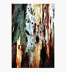 Coloured Bark Photographic Print