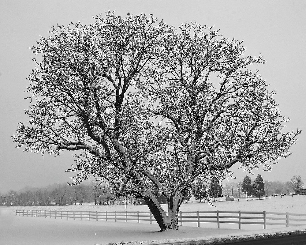 Ye Old Tree and Snow by ericseyes