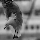 """""""The Seagull Has Landed"""" by chloemay"""