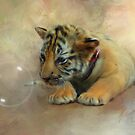 Tiger Cub with bubble by Bandicoot