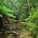 Tasmanian Forest by Kasia  Kotlarska
