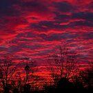 Sky Fire by Jim Haley
