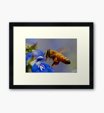 Coming in to Land... Framed Print