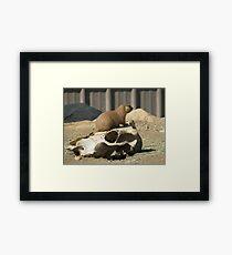 The Prairie Dog's Conquest Framed Print