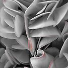 Succulents in the Botanical Gardens II B/W with Red by SilverLilyMoon