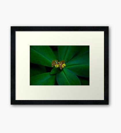 Simple beauty Framed Art Print