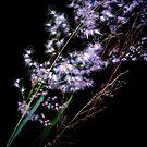 Dark Serenade by Melissa Park