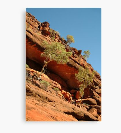 Palm Valley,near the West McDonell Ranges,N.T. Canvas Print