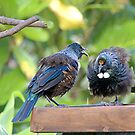 Tui.......It's no good getting all fluffed up, I don't do the menu.......!! by Roy  Massicks