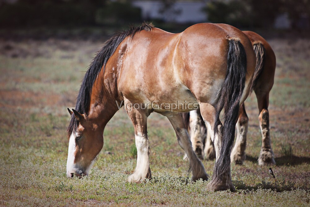 Clydesdales by VigourGraphics