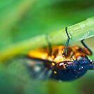 bug's eye view by xaiya