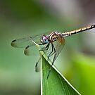 Dragon Fly by Ahiraj Bhat